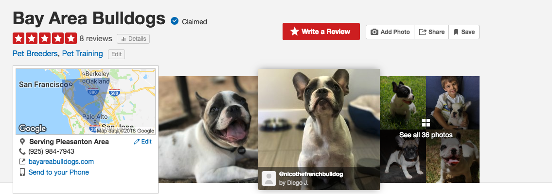 Bay Area French Bulldogs For Sale